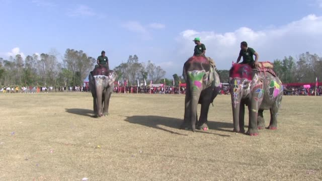 stockvideo's en b-roll-footage met hundreds cheer as the three beauty contest finalists stroll out into the middle of the grounds and raise their painted trunks to the judges symbols... - spelkandidaat