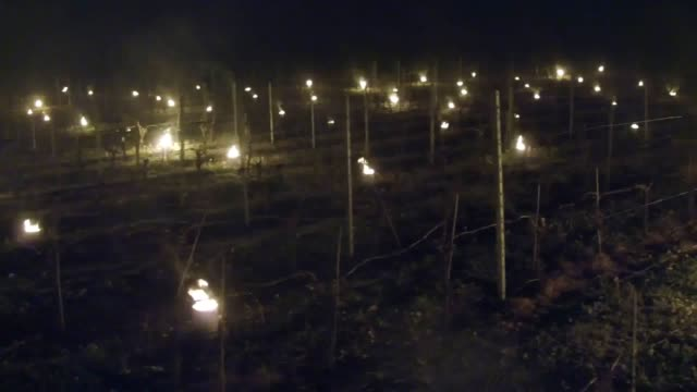 Hundreds of candles are lit in the vineyard of Waitrose's Leckford Estate farm in Hampshire to protect the grape vines from the late spring frost as...