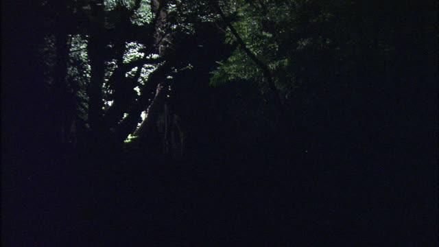 vídeos de stock e filmes b-roll de hundreds of fireflies flash their lights at night. - pirilampo escaravelho