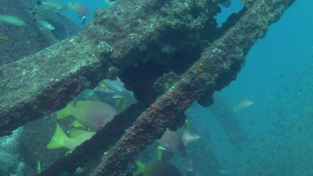hundreds of fish swim around a shipwreck in the sea of cortez. - shipwreck stock videos and b-roll footage