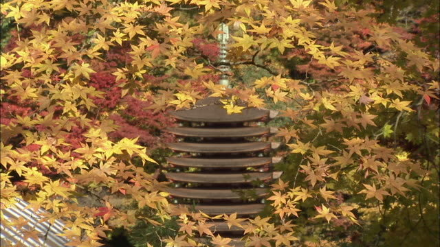 hundreds of leaves partially obscure a pagoda at the danzan shrine in the nara prefecture of japan. tanzan shrine - pagoda点の映像素材/bロール