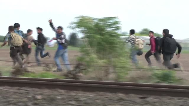 hundreds of migrants escape the hungarian police at the border point in roszke hungary's border with serbia has become a major crossing point into... - osteuropäische kultur stock-videos und b-roll-filmmaterial