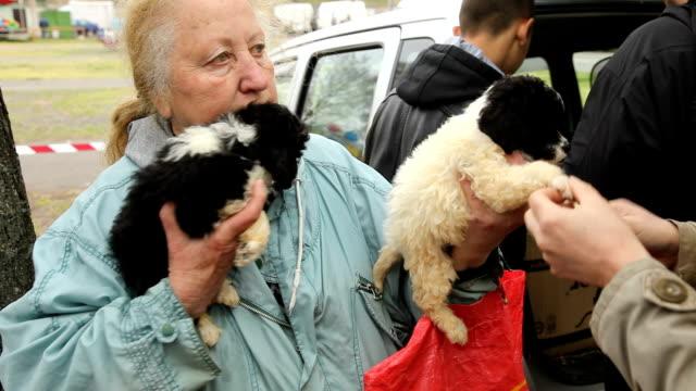 hungary, pécs, animal market (pecsi vasar, pécs flea market), woman selling puppies - vendere video stock e b–roll