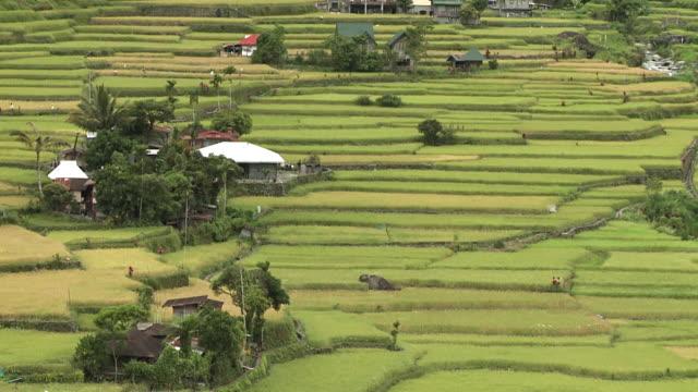 Hungduan Rice Terraces, Philippines