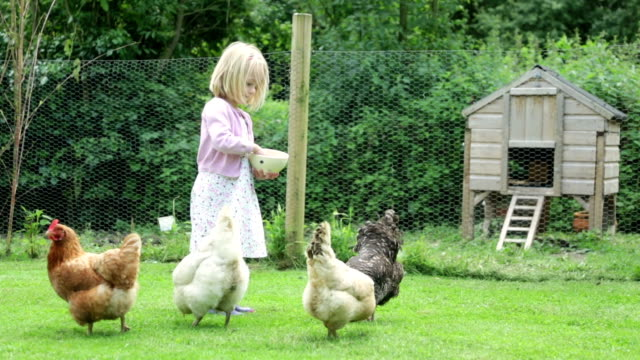 hungry chickens... - chicken bird stock videos and b-roll footage