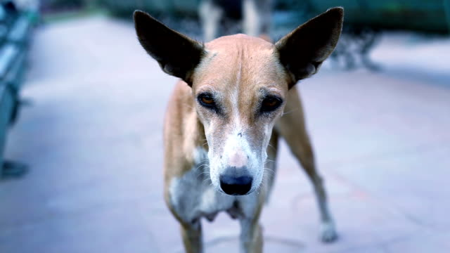 hungry dog - stray animal stock videos & royalty-free footage