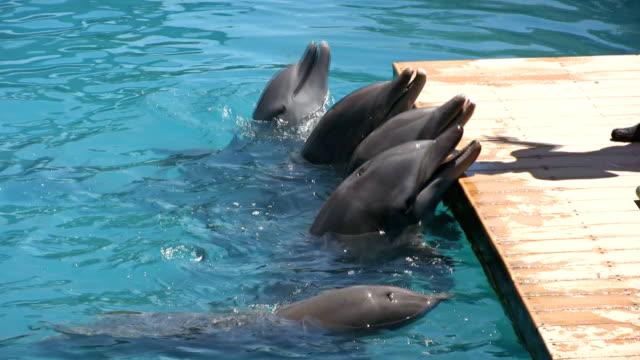 hungrig delfinen - freibad stock-videos und b-roll-filmmaterial