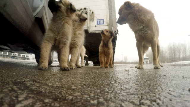 hungry, homeless puppies - stray animal stock videos & royalty-free footage
