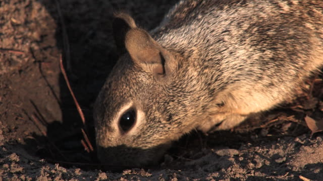 hungry squirrel eating hd - rodent stock videos and b-roll footage