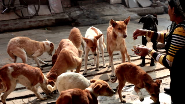 Hungry street dogs