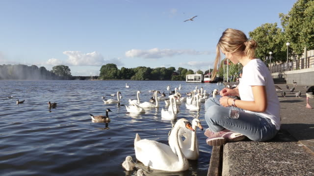 hungry swans being fed by a blond woman - person cross legged stock videos & royalty-free footage