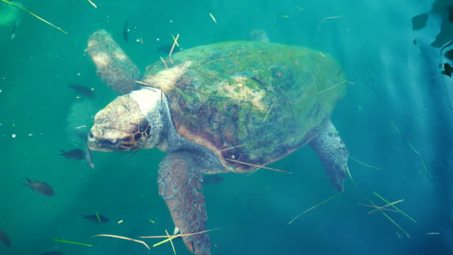 hungry turtle - mediterranean sea stock videos & royalty-free footage