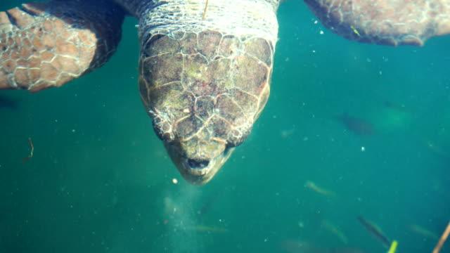 お腹が空いたタートル - 水棲ガメ点の映像素材/bロール