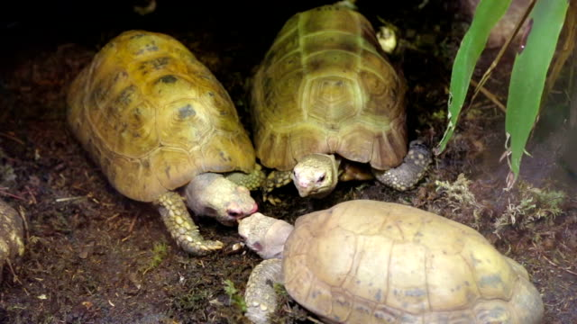 hungry turtles - two animals stock videos & royalty-free footage