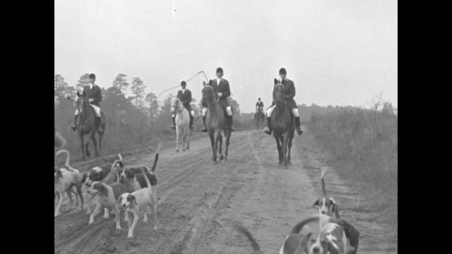 Hunt master throws scraps to pack of dogs as mounted hunters look on / two AfricanAmerican men wearing military uniforms blow bugles / dogs and...