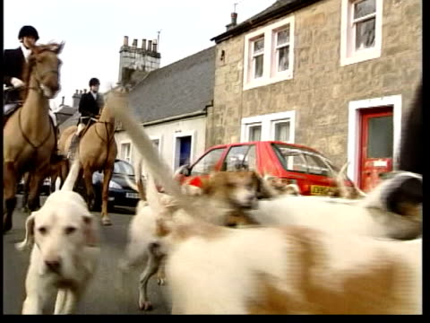hunt members and hounds along road hunt member sitting on horse with foxhound around cms foxhounds hunt members and hounds along lane bv ditto... - foxhound stock videos & royalty-free footage
