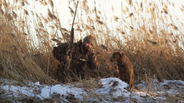 stockvideo's en b-roll-footage met hunter and his dog on the snowy bank of a pond duck hunting - alleen één mid volwassen man