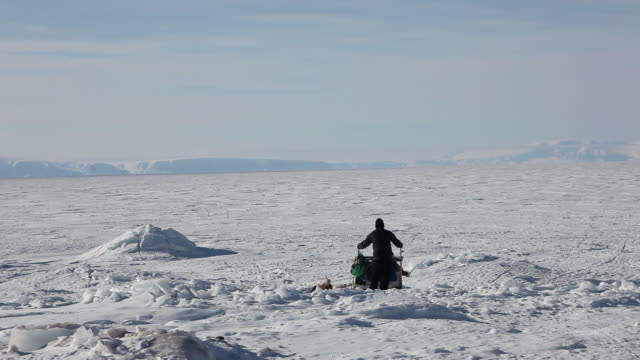 hunter going on sea ice with dogsled - inuit bildbanksvideor och videomaterial från bakom kulisserna