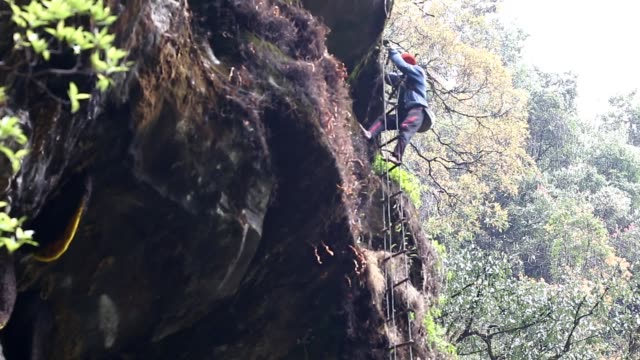a hunter harvest honey from the cliffs at the siding village machapuchare municipality kaski nepal hunters climb up to 300 feet at the cliffs to... - annapurna range stock videos and b-roll footage