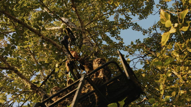 a hunter is hardly visible as he sits in his tree stand and nocks an arrow as he waits for the animals he is hunting to walk by as the golden light of sunset hits the trees leaves giving off a beautiful hue. - caccia sport con animali video stock e b–roll