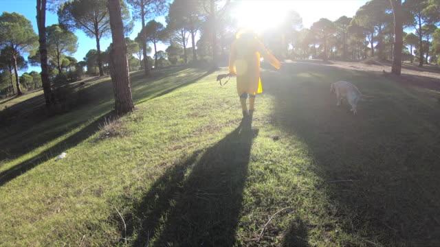 vídeos y material grabado en eventos de stock de hunter man caminando con su perro y pistola en el bosque - perro cazador
