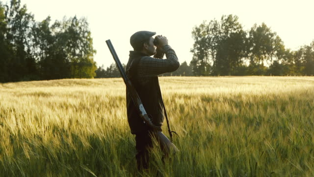 hunter rises binoculars at golden hour - hunting sport stock videos & royalty-free footage