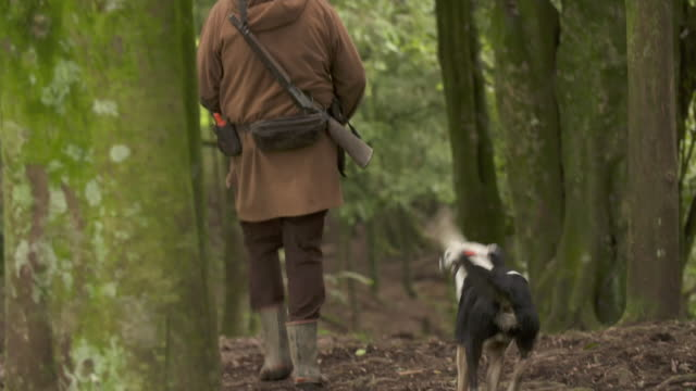 vidéos et rushes de hunter trekking through new zealand bush with hunting dogs - chasser