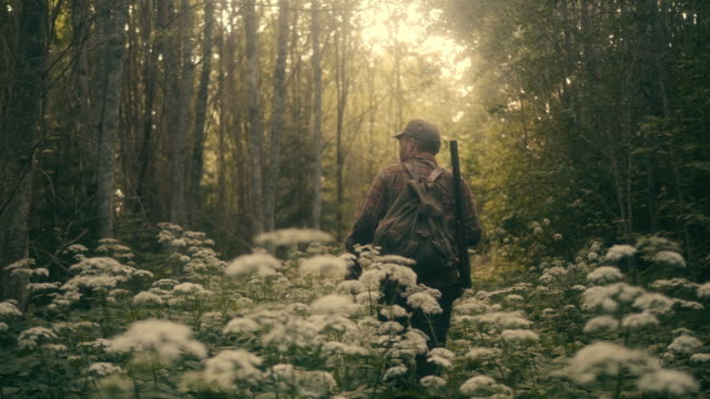 stockvideo's en b-roll-footage met hunter wandelen in het bos met shotgun (slow motion) - jacht