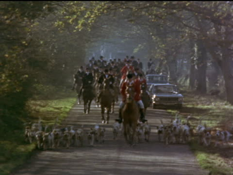 hunters and hounds prepare for the hunt then ride off into an open field - foxhound stock videos & royalty-free footage