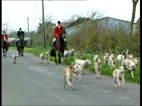 hunting act becomes law; itn england: ext huntsmen and hounds towards on country road 00:00:15 lms hunting dogs in field pull out to masters of the... - foxhound stock videos & royalty-free footage