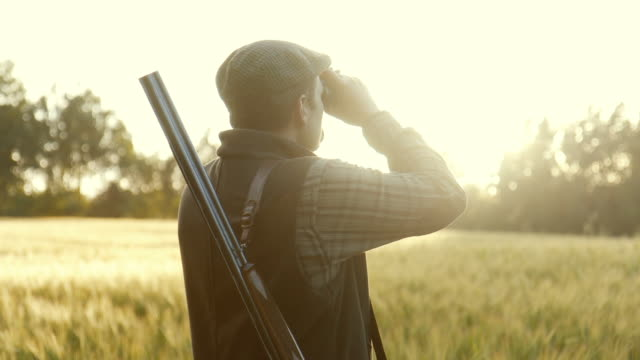 hunting at golden hour (slow motion) - hunting stock videos & royalty-free footage