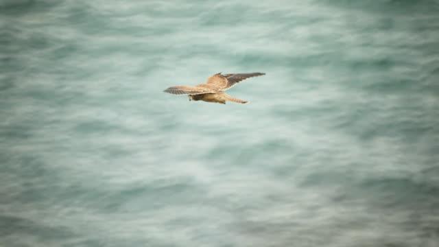 hunting bird - bird hunting stock videos & royalty-free footage
