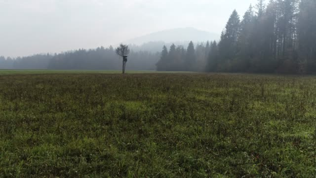 Hunting Lookout Tower on a Meadow on a Foggy Day
