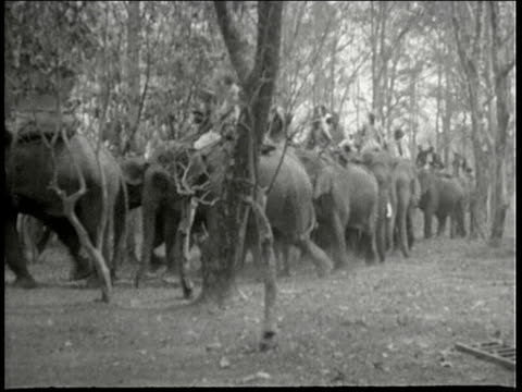 Hunting party riding on elephants through forest Gir Forest India