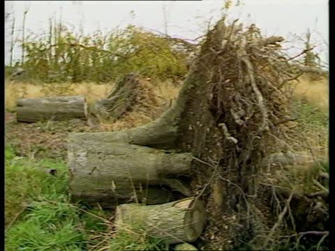Kent Toys Hill CMS Stump of tree PAN LR as branches of fallen trees lying on ground of wood TCMS Uprooted trunk of tree PULL OUT uprooted tree stump...