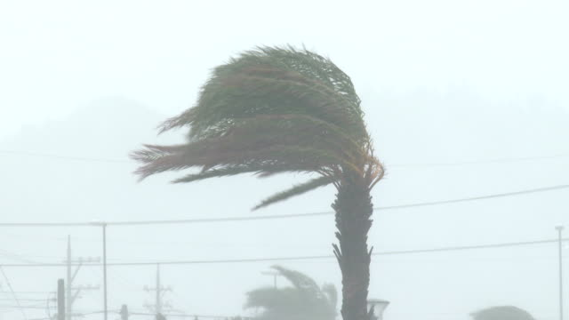 hurricane eyewall wind rain lash palm trees - hurrikan stock-videos und b-roll-filmmaterial