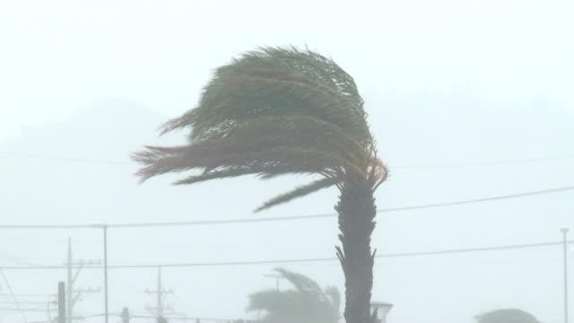 vídeos y material grabado en eventos de stock de hurricane eyewall wind rain lash palm trees - huracán