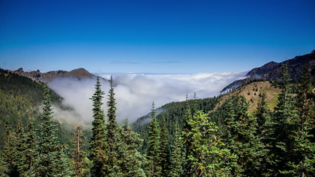 hurricane ridge, olympic national park - time lapse - pacific northwest usa stock videos & royalty-free footage