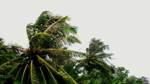 hurricane - storm - caribbean stock videos & royalty-free footage