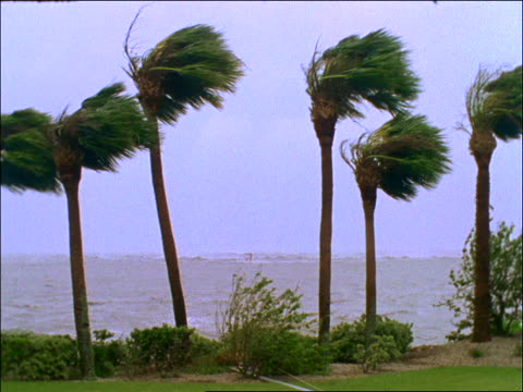 vídeos de stock, filmes e b-roll de hurricane winds blowing palm trees near ocean / florida / hurricane andrew - 2001