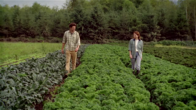 husband and wife farmers walking through field of organic kale - kale stock videos and b-roll footage