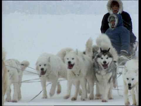 huskies pull along sleigh with inuit riders across snowy landscape - inuit stock videos & royalty-free footage