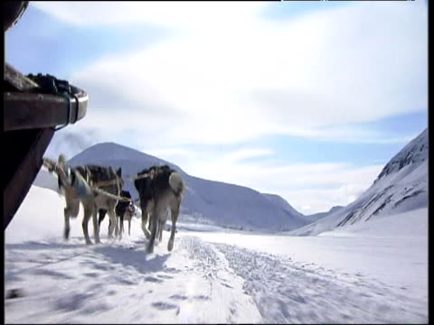 Huskies pull sledge across snow covered glacier Norway