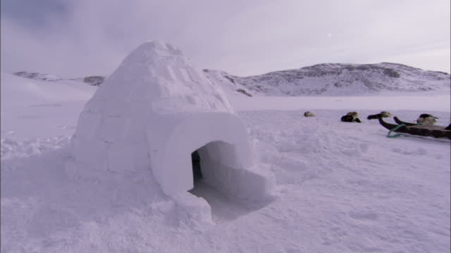 huskies rest near an igloo. available in hd. - igloo stock videos & royalty-free footage