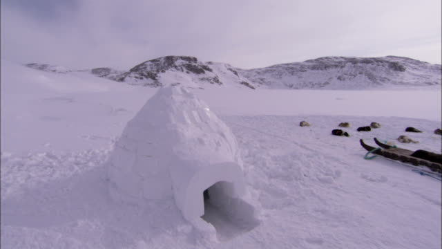 huskies rest near an igloo in greenland. available in hd. - igloo stock videos & royalty-free footage