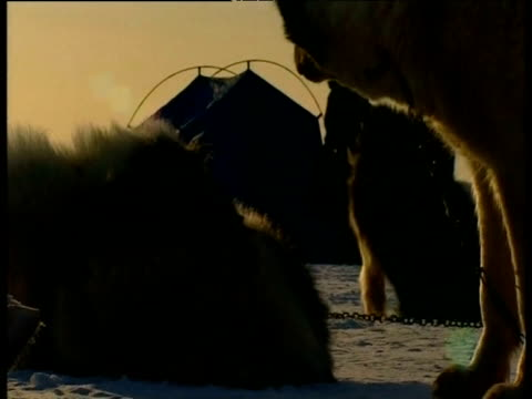 huskies resting as hunters set up camp arctic - dog erection stock videos & royalty-free footage