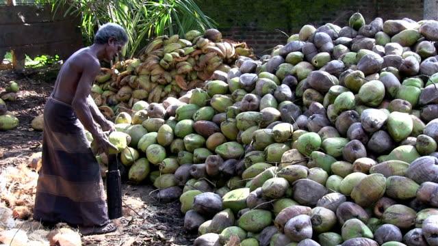 vidéos et rushes de décorticage noix de coco sri lanka - culture sri lankaise