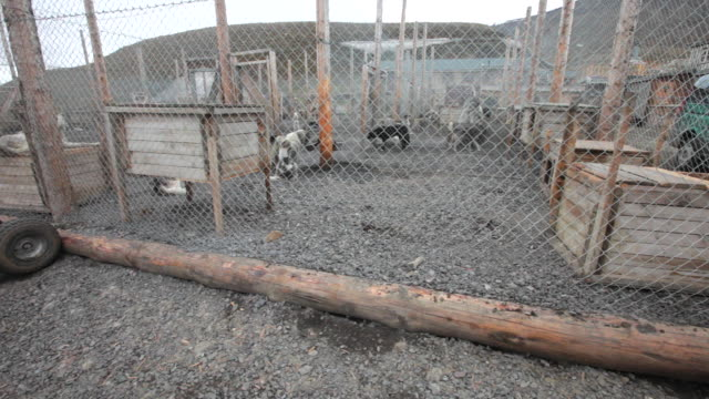 A husky dog- kennel on Spitsbergen, Svalbard archipelago