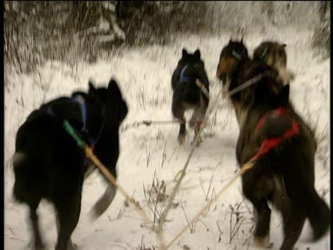 husky dogs pulling sled across snow alaska - arbetsdjur bildbanksvideor och videomaterial från bakom kulisserna