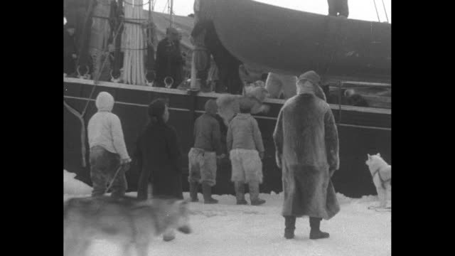 ws husky dogsled teams / close view of huskies pulling dogsled / husky being lifted by rope onto ship effie m morrissey men including robert bartlett... - effie stock videos and b-roll footage